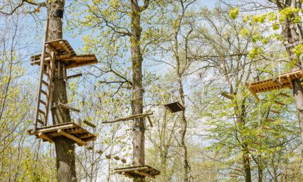 Heilbronn auf den 2. Blick – Die Fotoparade aus der Wissensstadt (19): Waldkletterpark